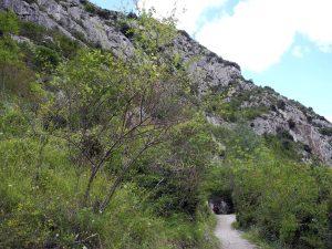 Mağaranın girişine giden patika. Kaynak: Don Hitchcock