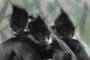 Fotoğraf: St. Louis Hayvanat Bahçesi